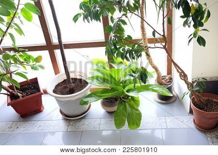 Various Decorative Flowers And Plants In Pots On A Tiled Floor, Indoor Contra Light Shot