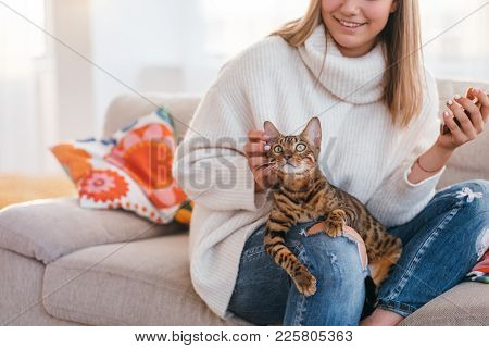 Owner Love Tenderness Girl Scratching Cat