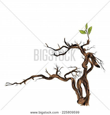 dry branch sketch vector graphics color picture