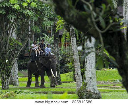 Tourist Ride A Sumatran Elephant
