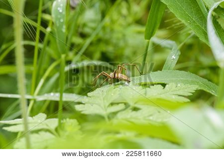 Spider On A Leaves