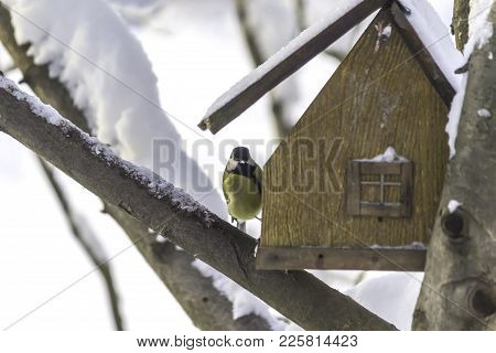 The Great Tit (parus Major) Flew To The Bird Feeder. Frosty Day, A Lot Of Snow. The Middle Of Winter