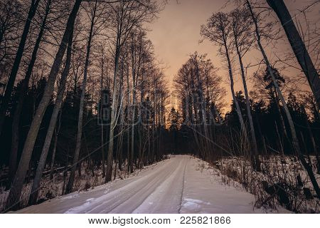 Forest Road In Bialowieza Forest National Park In Podlasie Region Of Poland