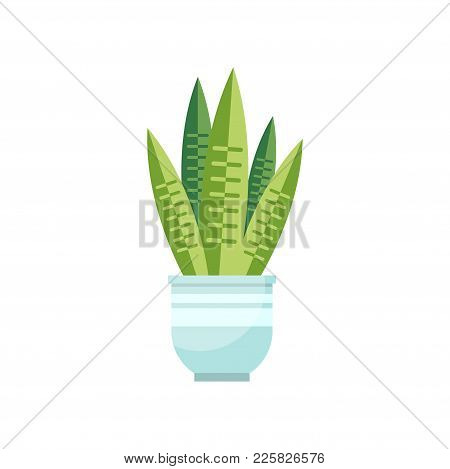 Sansevieria House Plant, Indoor Flower In Pot, Elegant Home Decor Vector Illustration On A White Bac