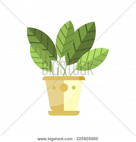 Spathiphyllum House Plant, Indoor Flower In Pot, Elegant Home Decor Vector Illustration On A White B