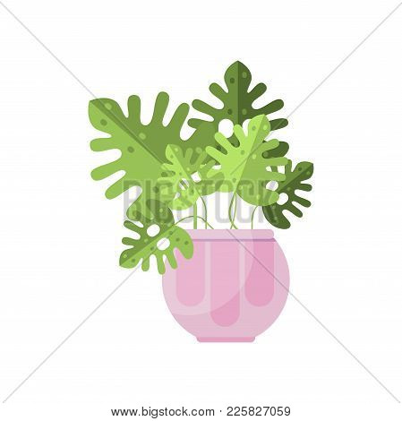 Philodendron House Plant, Indoor Flower In Pot, Elegant Home Decor Vector Illustration On A White Ba