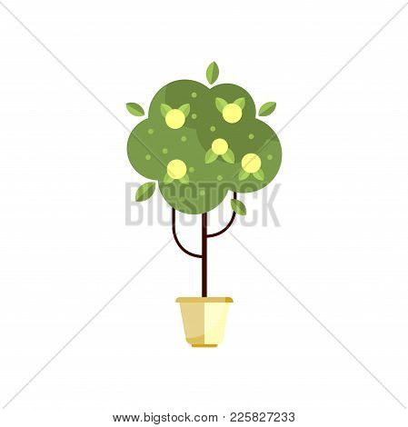 Tree In Pot With Green Foliage And Fruits, Indoor Flower In Pot, Elegant Home Decor Vector Illustrat