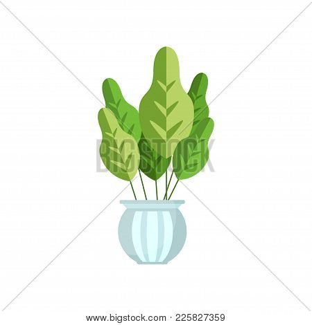 Herbaceous House Plant, Indoor Flower In Pot, Elegant Home Decor Vector Illustration On A White Back