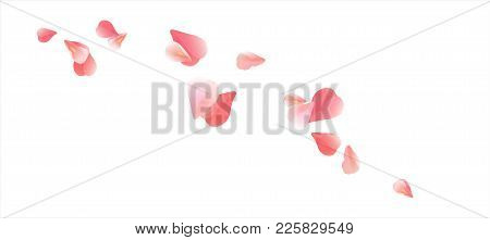 Pink Flying Petals Isolated On White Background. Sakura Roses Petals. Vector Eps 10 Cmyk