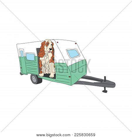 English Cocker Spaniel Dog Breed Vintage Illustration Isolated