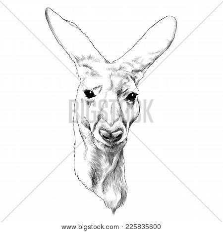 Kangaroo Head Sketch Vector Graphic Monochrome Drawing