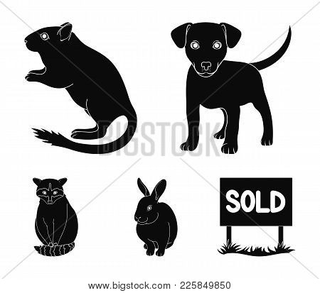 Puppy, Rodent, Rabbit And Other Animal Species.animals Set Collection Icons In Black Style Vector Sy