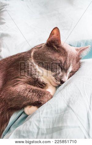 Grey Cat Sleeping Bed Cute Fluffy Paw.