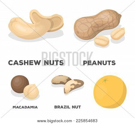 Peanuts, Cashews, Brazil Nuts, Macadamia.different Kinds Of Nuts Set Collection Icons In Cartoon Sty