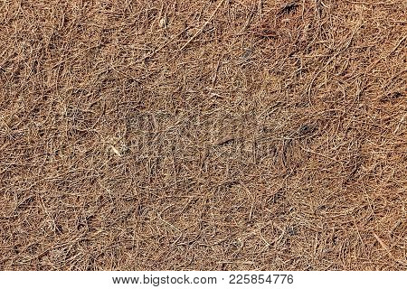 Coconut Coir. Grated Coconut Shell For The Production Of Mattresses. Seamlless Texture, Natural Back