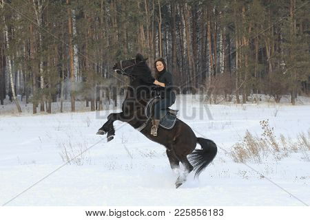 Young Woman Rids On Black Horse In Snowy Countryside - The Steed Stands On Its Hind Legs, Telephoto