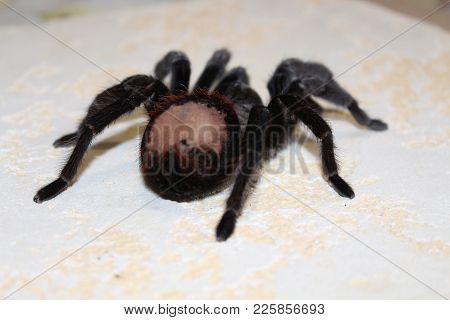 Tarantula Sits On A Beautiful Background