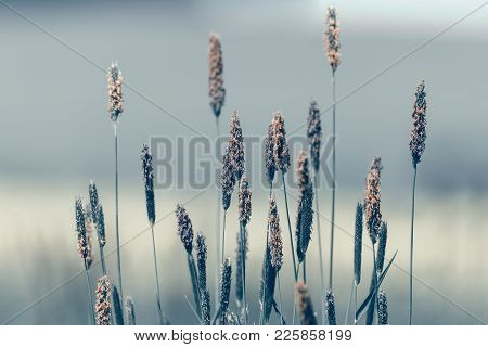 Grass On Meadow, Abstract Color