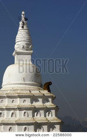 Monkey Sitting On A Roundhouse
