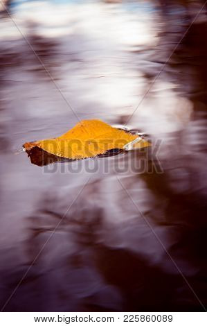 Autumn Leaf In Water, Late Autumn Evening