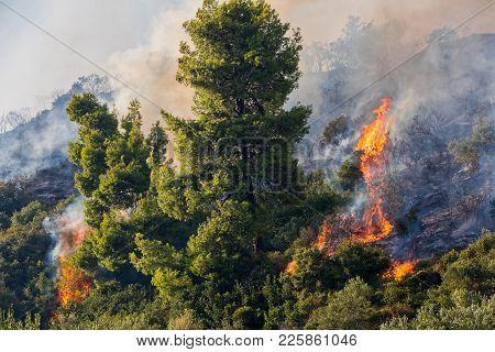 Fire In A Pine Forest In Kassandra, Chalkidiki, Greece