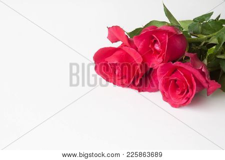 Red Rose On A White Background For Valentine .