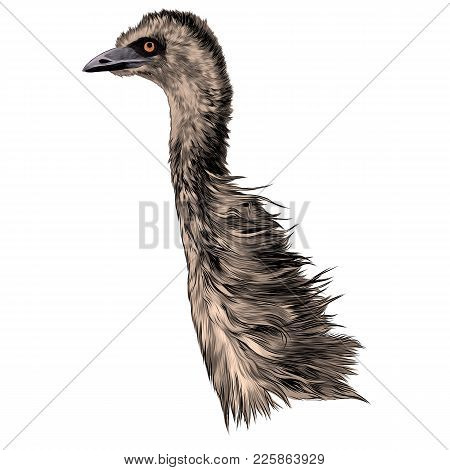Ostrich Head Sideways Sketch Vector Graphic Colored Drawing