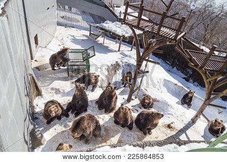 Noboribetsu, Japan, January 27, 2018: Hokkaido Brown Bear An Attraction At Noboribetsu Bear Park Dur