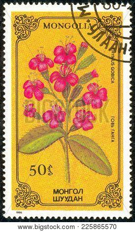 Ukraine - Circa 2018: A Postage Stamp Printed In Mongolia Show Flower Thymus Gobica. Series: Flowers