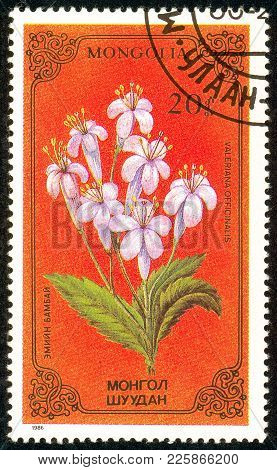 Ukraine - Circa 2018: A Postage Stamp Printed In Mongolia Show Flower Valeriana Officinalis. Series: