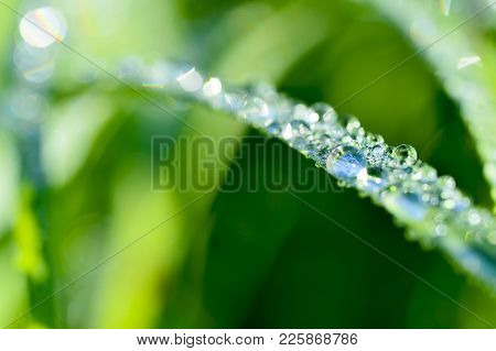 Garland Drops Of Morning Dew In The Spring Close Up At Dawn. Fabulous Bokeh. The Shallow Depth Of Fi