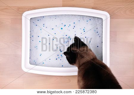 Cat Examines Kitty Litter Box With Eco-friendly Silicate Litter