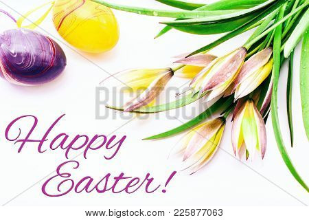 Happy Easter. Easter Eggs And Crocuses Spring Flowers On White Background With Copy Space. Border Te