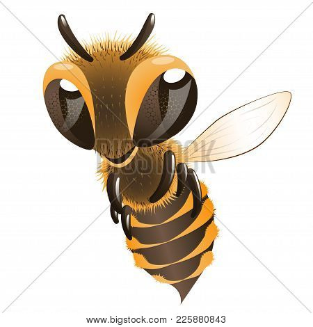 Happy Bee. Cartoon Character Fling Bee Over White Background.