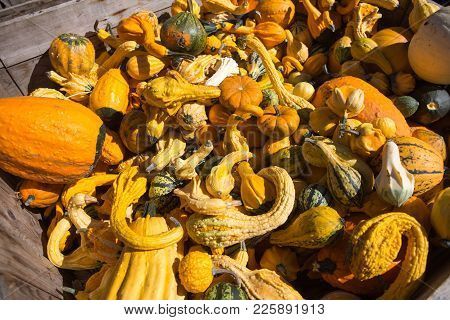 A Pile Of Halloween Pumpkin At A Farm