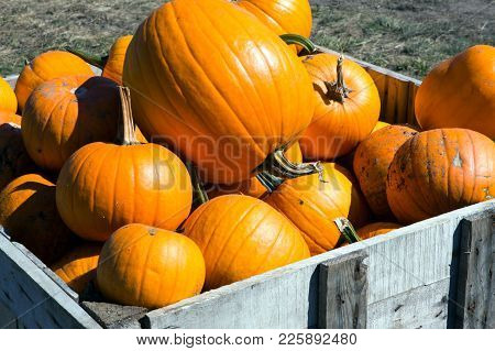 A Pile Of Halloween Pumpkins At A Farm