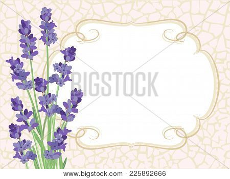 Lavender. Background With Lavender Flowers And Texture Crackle.