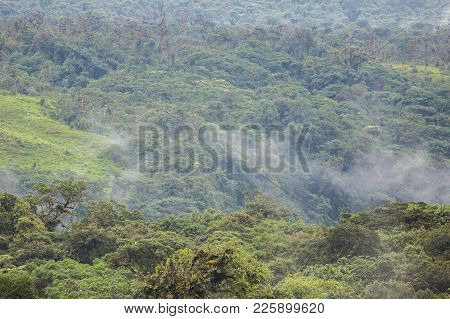 Rain Forest, South America, Ecuador, Landscape, Haze
