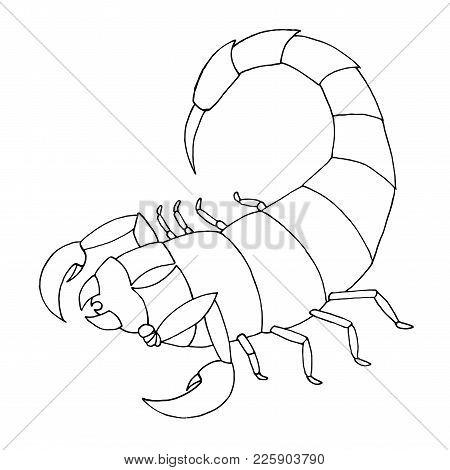 Scorpion Coloring Book. Vector Outline Illustration Scorpio
