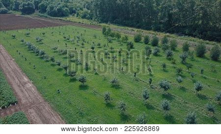 Agricultural Landscape In The Park Aerial View. Clip. Aerial View Flying Above Vast Green Meadow Fie