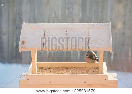 Bullfinch In The Bird Feeder In Winter