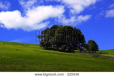 Highland Field
