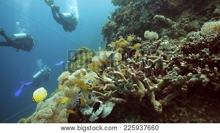 Scuba Divers Explores Underwater Coral Reef And Watching The Fish.scuba Diver Underwater In A Tropic
