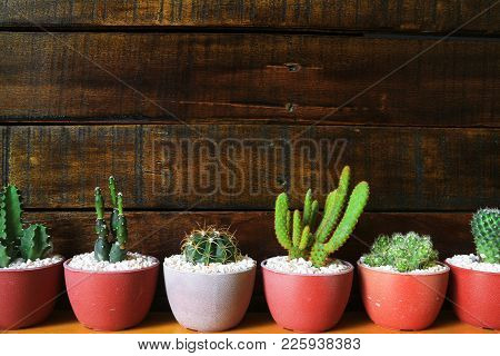 Several Types Of Little Cacti Wooden Background With Space For Text