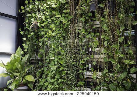 Green Wall Of Eco Friendly Vertical Garden, Stock Photo