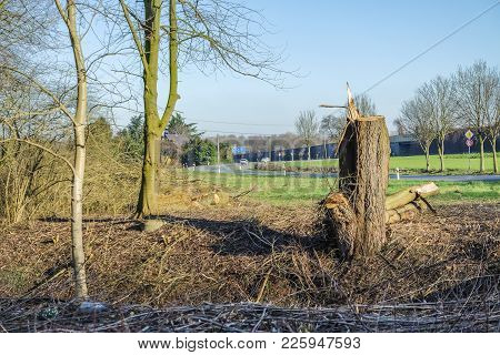 Felled Tree After The Storm In German City