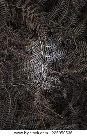Detailed Macro Intimate Landscape Image Of Frozen Fern Frond Among Foliage