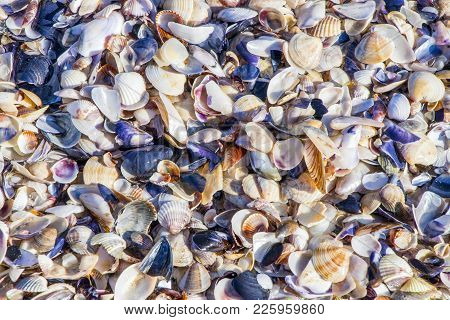 Background Sea Shells On The Beach Of The Black Sea Of Bulgaria