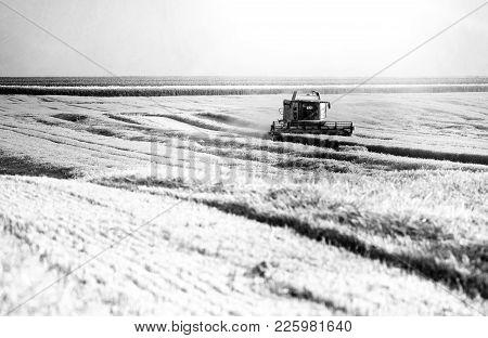 Combine Harvester Threshing Wheat In Fertile Plains