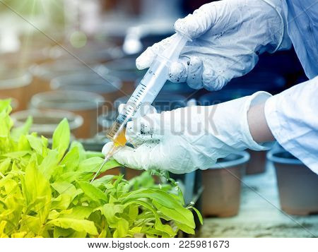 Biologist In White Coat Pouring Liquid From Syringe Into Flower Pot With Sprout In Greenhouse